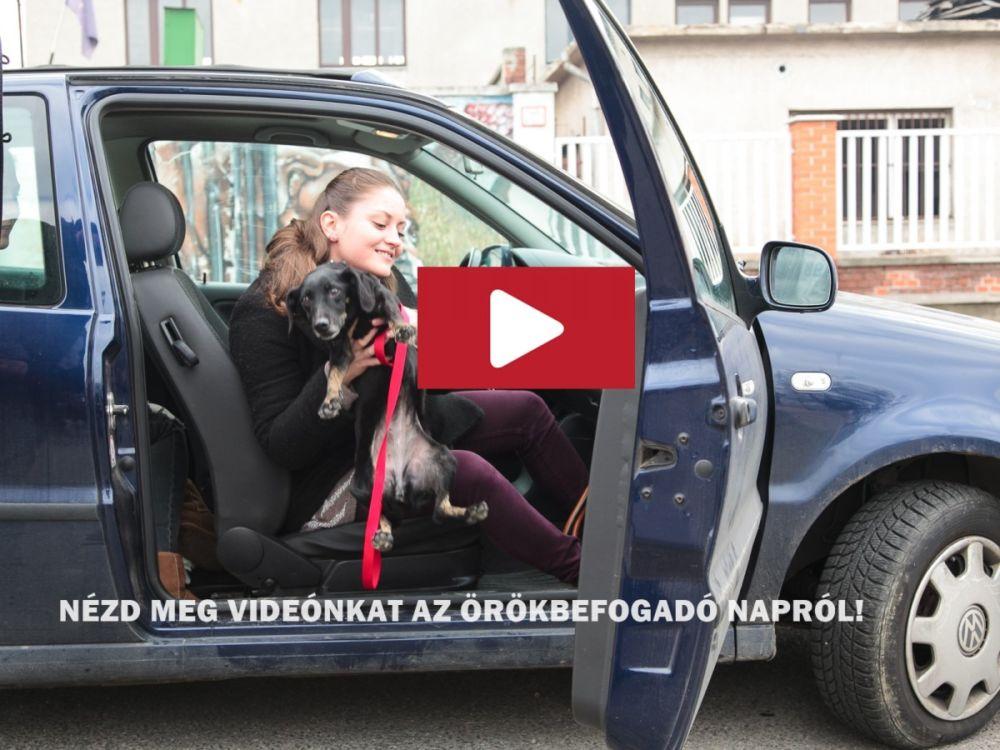 Video.nyitókép