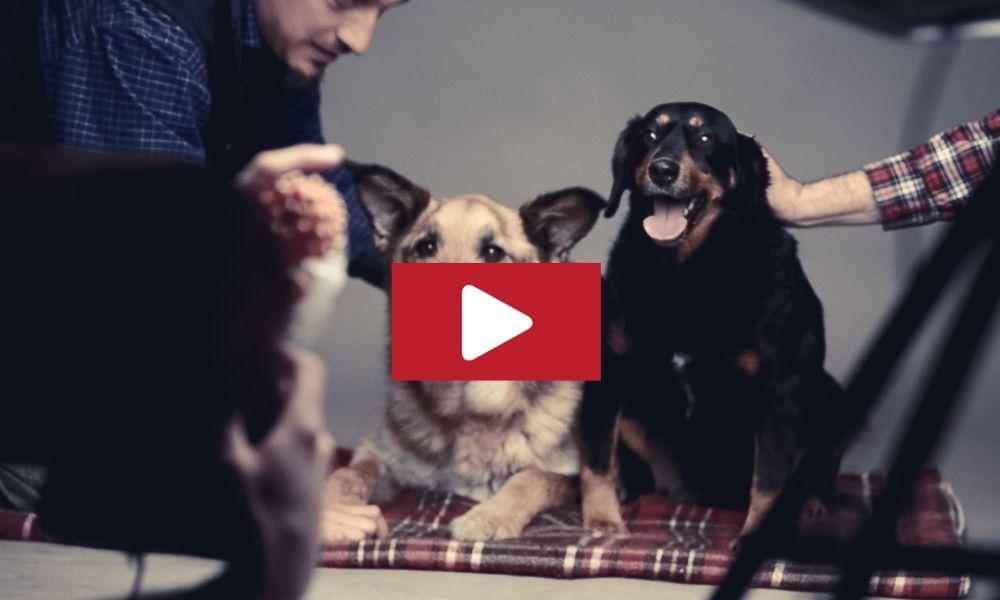Video.MaciLeilaWerk