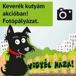 fotopalyazat-ikon