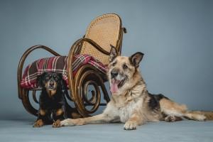 Maci&Leila (0)